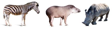cutouts: Set of Odd-toed ungulate animals. Isolated over white