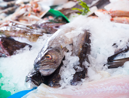 gilt head: fresh raw hoki on fish market in ice