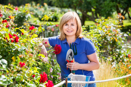 horticultural: Smiling happy  mature woman gardening red roses and holding horticultural tools on sunny day