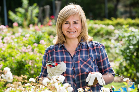 horticultural: glad blond mature woman taking care of bushes with white flowers in garden on summer day Stock Photo