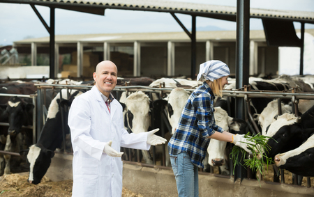 milker: Portrait of smiling cowgirl and doctor working in cowhouse