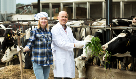 milkman: Portrait two workers of vets posing with milky cows in cowhouse outdoors Stock Photo
