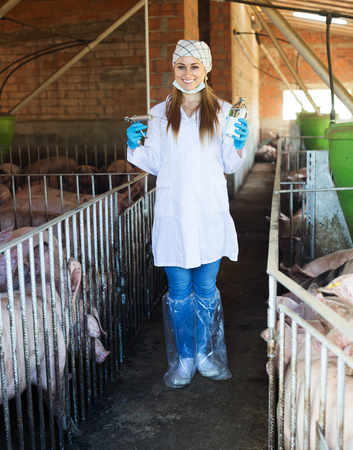 swine flu vaccines: Smiling woman veterinarian in white coat holding syringe and vial in pigsty
