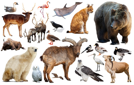 collection of different birds and mammals from Europe isolated on white background Stock Photo