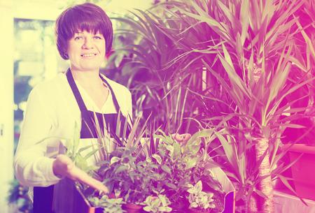 tending: Glad shop assistant tending numerous green plants in flower shop Stock Photo