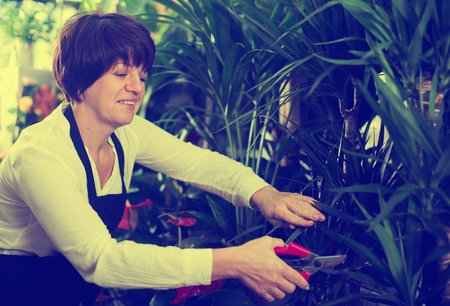 tending: Female shop assistant tending yucca trees in flower shop