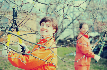 secateur: Two women pruning fruits tree in the orchard
