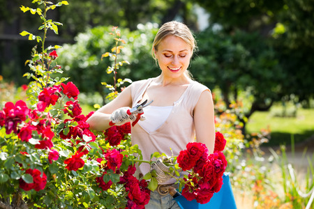 horticultural: ?heerful young woman working with bush roses with horticultural tools in garden on sunny day