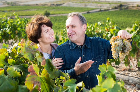 Happy elderly wine maker shows to wife grown-up grapes