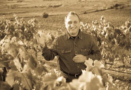 pinot: Positive smiling mature man gathers grapes on vineyard