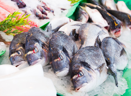 gilt head: fresh dorado on market fish counter, close up Stock Photo