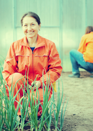 Happy women works at hothouse in spring