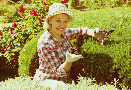 Happy senior woman trimming a green hedge in the garden