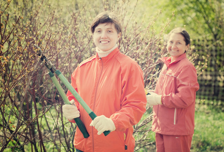 Two women pruned branches in the garden in spring Stock Photo