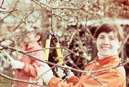 Two women pruned branches in the orchard in spring Stock Photo