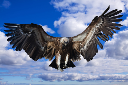 Flying griffon against  sky background Stock Photo