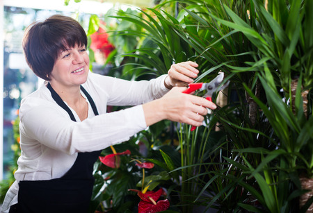 Woman seller tending yucca palm trees in flower shop