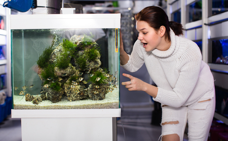 barbus: Girl is looking at striped and colorful fishes in aquarium with rocks and algae.
