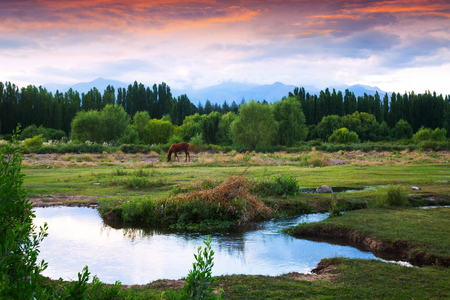 View of Andes mountains from green valley near Mendoza. Argentina, Patagonia, South America Stock Photo