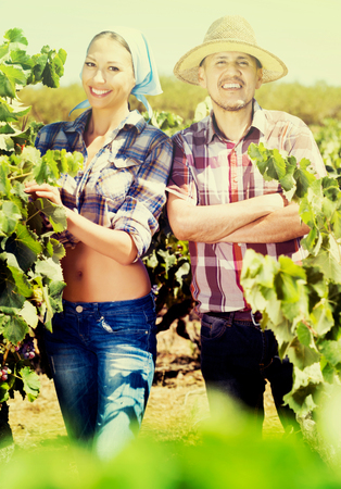 Happy mature man and young woman gardeners standing among grapes trees on sunny day