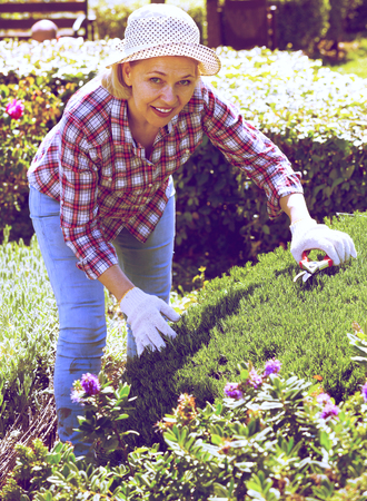 Positive senior woman trimming a green hedge in the garden Stock Photo