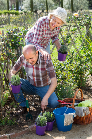 Elderly smiling couple engaged in gardening with flowers in the backyard garden