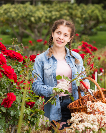 smiling english female posing near roses and holding a basket in the garden Stock Photo