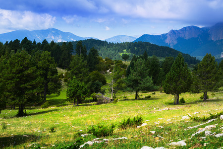 pine trees at mountains under cloudy sky. Pyrenees, Catalonia Stock Photo