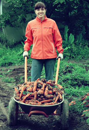 unwashed: young woman with harvested carrots in field