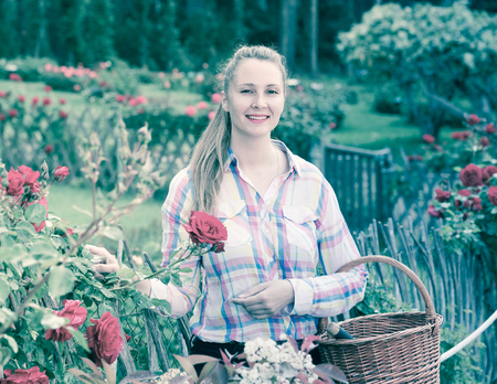 happy english female holding a basket and standing near the blooming roses