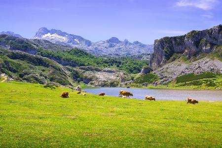 landscape with lake and pasture. Lake Ercina.  Asturias Stock Photo