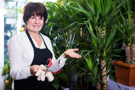 Glad shop assistant displaying yucca palms in flower shop Stock Photo