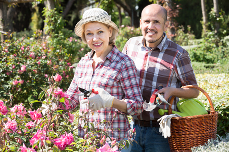 Adult cheerful couple engaged in gardening in the backyard garden Stock Photo
