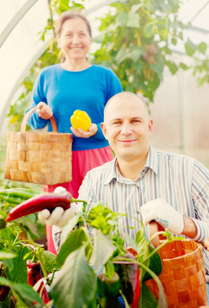Man and woman in vegetable plant  at hothouse photo