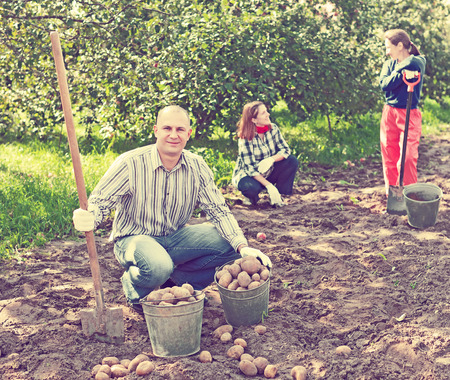 family harvesting potatoes in vegetable garden photo