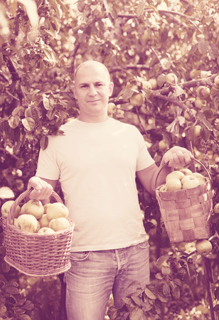 Smiling man with basket of harvested apples in garden photo