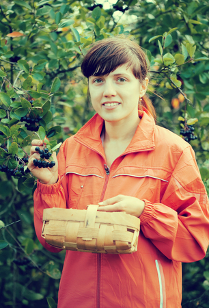 Young woman picking chokeberry in the plant photo