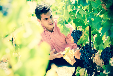 Portrait of european worker at grape farm in summer day Stock Photo
