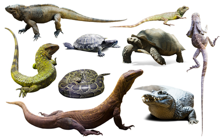 set of various reptiles isolated on white