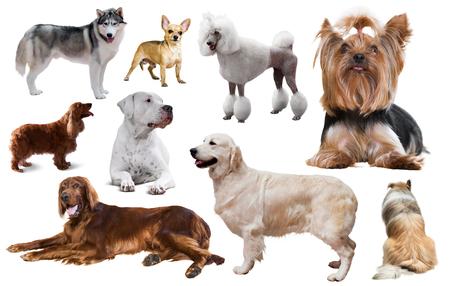muchos diferentes tipos de razas de perros aislados en blanco