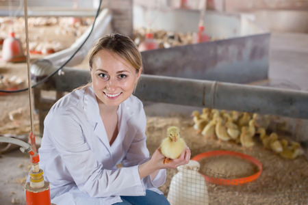Positive female veterinarian holding duckling in hands on farm