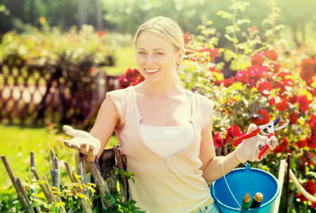 Beautiful young blond woman taking care of red rose bushes in garden on summer day