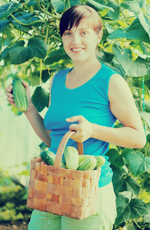Smiling woman picking cucumber in the greenhouse