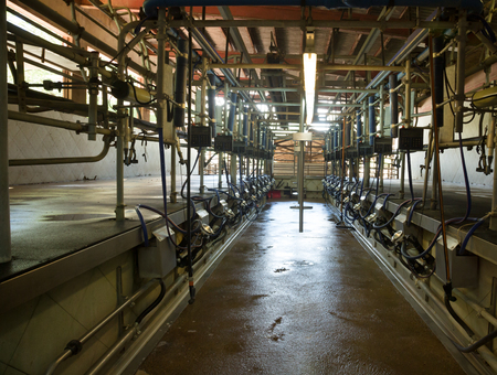 Automatic milking system for cows in dairy farm