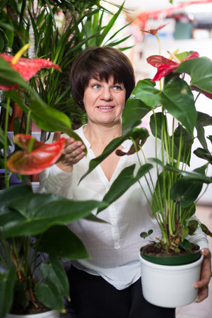Woman customer choosing red anturion to buy in flower shop Stock Photo