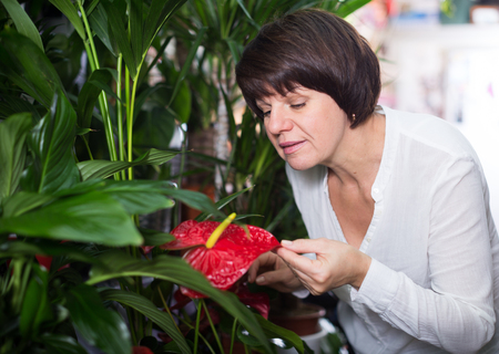 Smiling woman deciding on red anturion to buy in flower shop