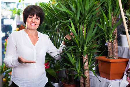 Female customer choosing best yucca tree to buy in flower shop Stock Photo