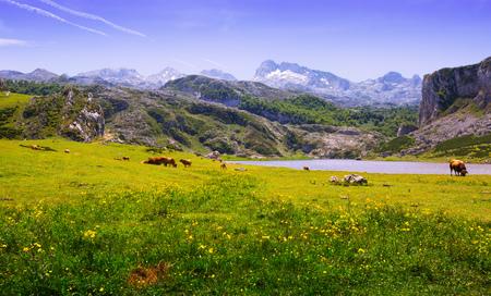 Summer landscape with lake. Lake Ercina . Asturias, Spain Stock Photo