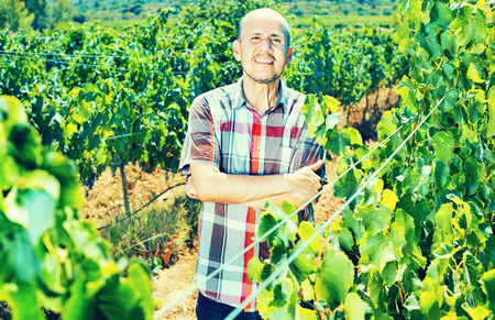 Smiling mature man worker standing among grapes trees on sunny day