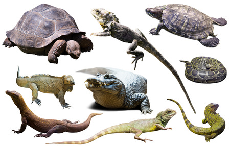 assortment of different reptiles isolated on white background